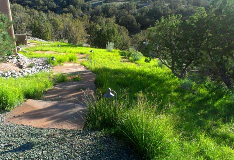 Seeding with native grasses the raincatcher santa fe nm revegetation with a blend of native grasses workwithnaturefo