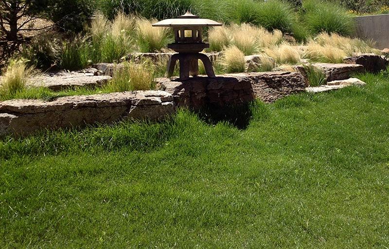 Seeding with native grasses the raincatcher santa fe nm blue gramabuffalo grass lawn workwithnaturefo