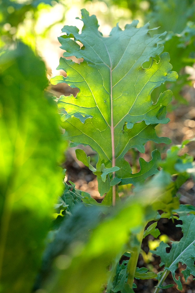 Explore A Santa Fe Permaculture Food Forest The