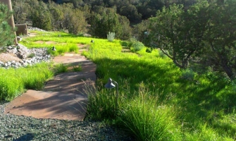 Revegetation with a blend of native grasses