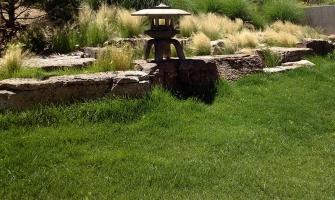 Blue grama/buffalo grass lawn