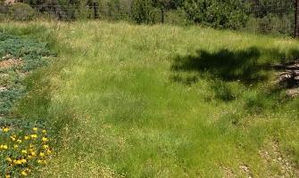 Trimmed blue grama buffalo grass lawn
