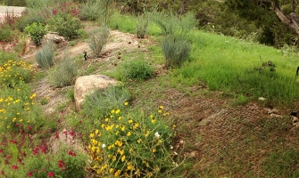 Revegetation with native grass & wildflowers