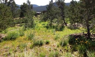 Prairie/meadow-type revegetation using natives