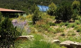 Revegetation with native grass & wildflowers