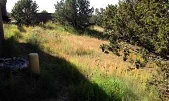 Hillside revegetation