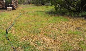 Temporary irrigation germinating native grasses