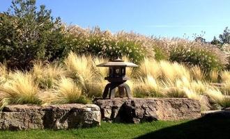landscaping-grasses2