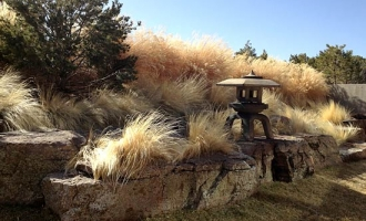 landscaping-grasses3