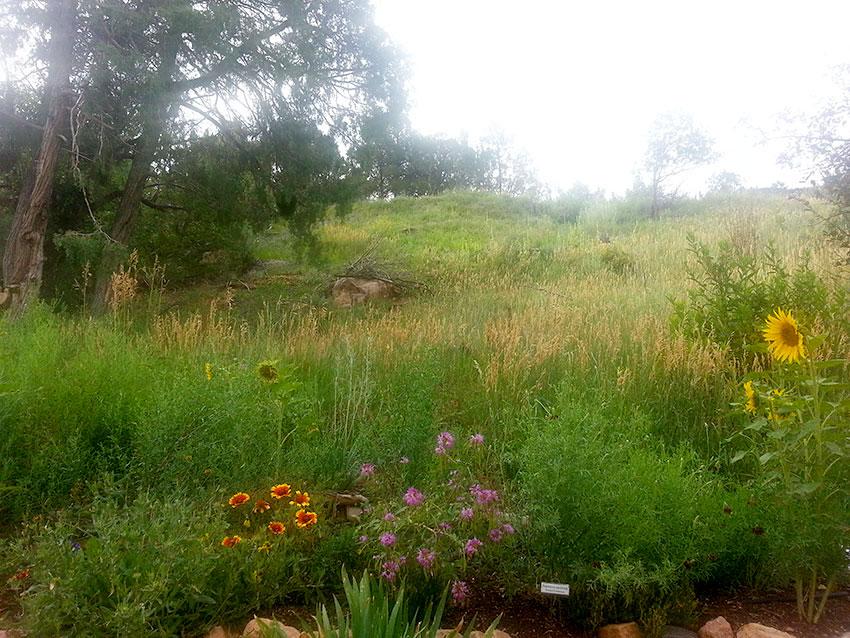 Audubon-seeding2