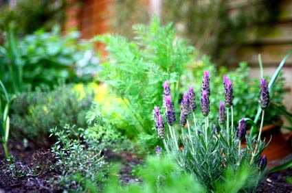 Thyme, lavender, dill and other herbs make great garden fillers or they can be a decorative area in your landscaping on their own.