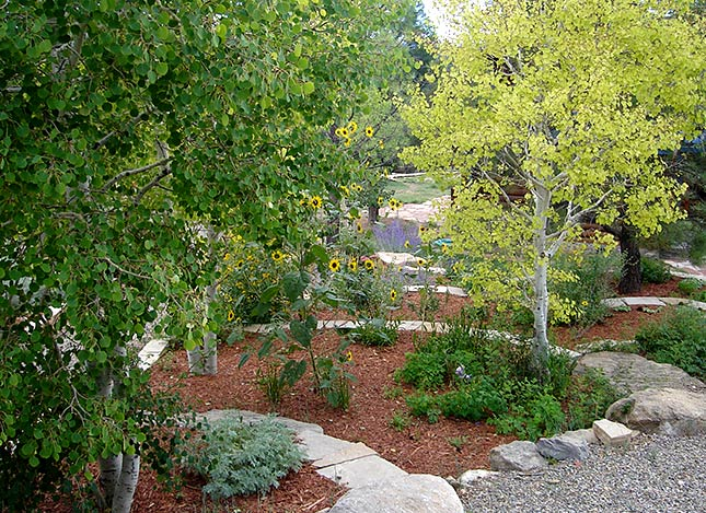 landscaping-trees-terraces